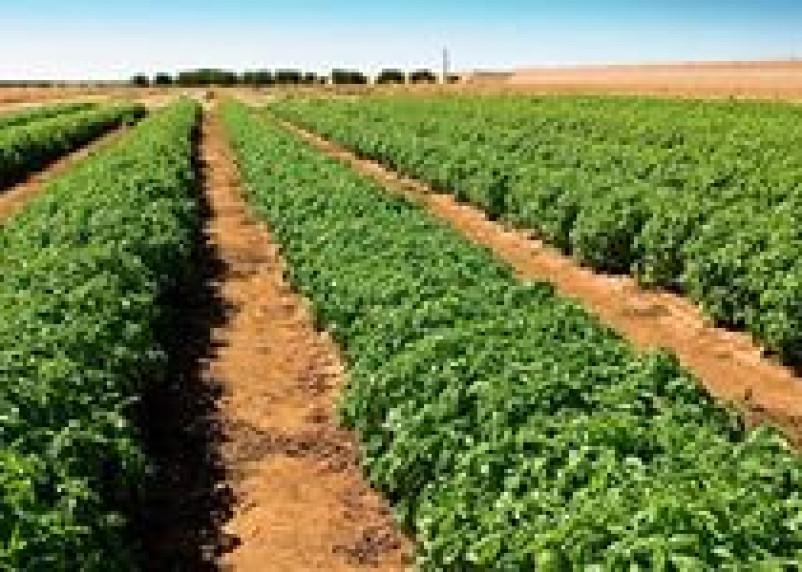 Смоленщина получит 106 миллионов рублей на поддержку растениеводства