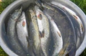 На озере в Смоленском районе поймали браконьеров