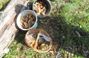 За минувшие выходные в смоленских лесах заблудилось семь грибников