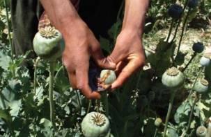 Смолянин выращивал мак в «кулинарных целях»