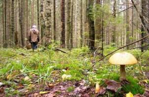 Ушедшая в лес за грибами 90-летняя бабушка найдена мертвой