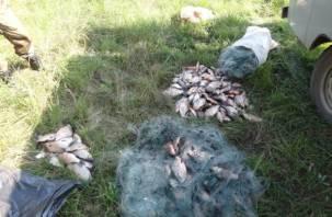 Из смоленских водоемов незаконно выловлено около 90 кг рыбы