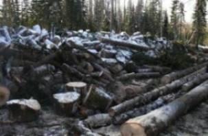 В Краснинском районе у черного лесоруба нашли боеприпасы и взрывчатку