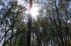 Мужчина, потерявшийся в лесу в Ельнинском районе, найден мертвым
