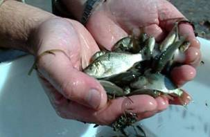 В Смоленске обсудили российско-белорусские проблемы рыбоводства