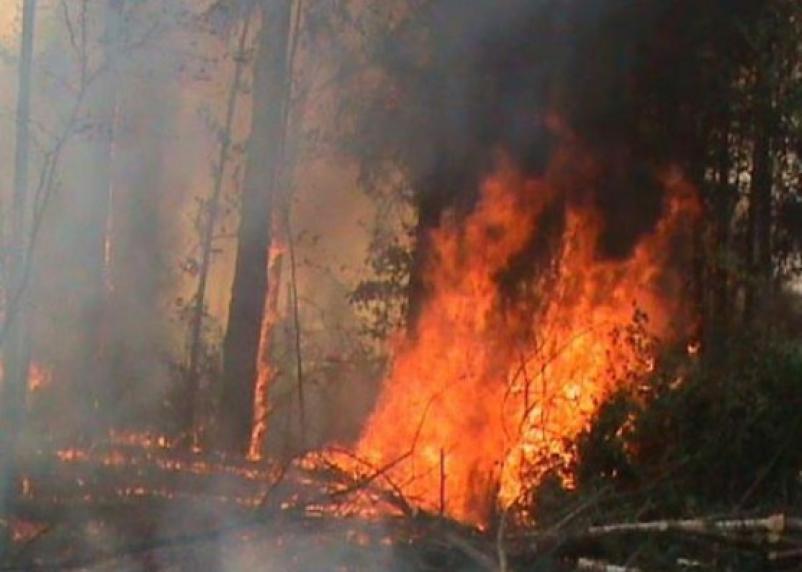 Смоленские пожарные уехали тушить брянские леса