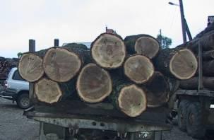 Благодаря прокуратуре в Краснинском районе осудили черных лесорубов