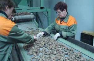 На Смоленщине объявлен сбор еловых шишек