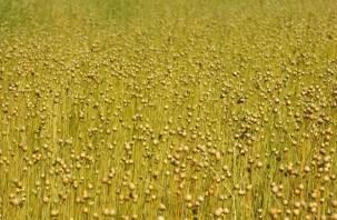 Зеленым символом Смоленщины выбран лен