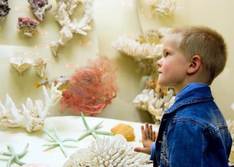 В Смоленске открывается экологический клуб для дошкольников «Малышандия»