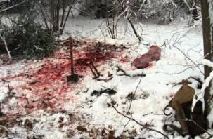В Гагаринском районе браконьеры убили лося