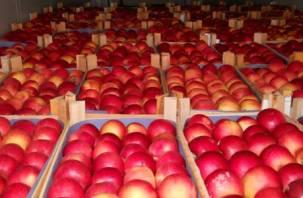 Через Смоленскую область не допустили в Казахстан 400 тонн фруктов