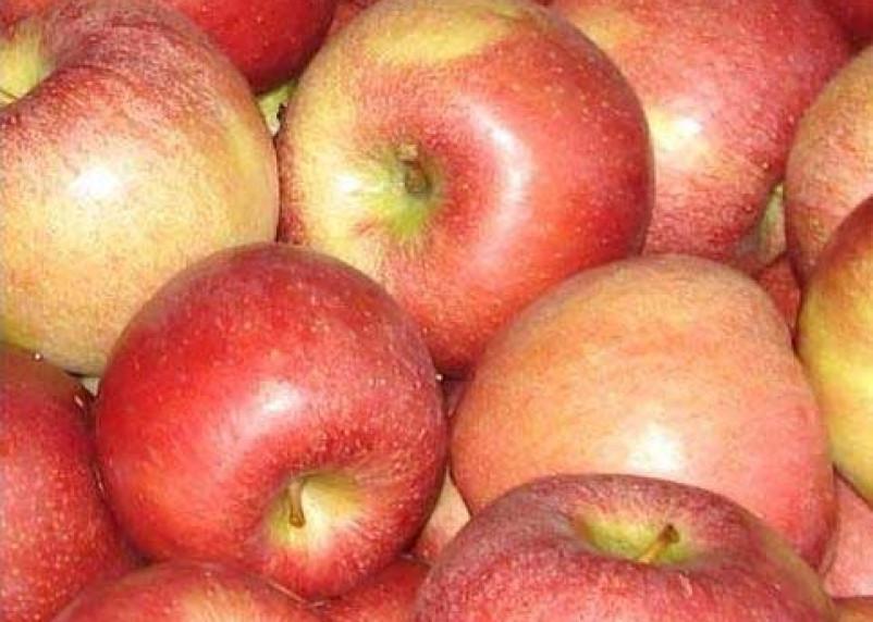 Полторы сотни тонн заграничных фруктов, овощей и ягод снова не попали в Россию