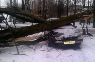 Ураганный ветер в Смоленске уложил дерево на автомобиль
