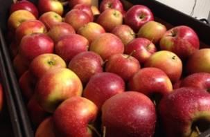 В Россию пытались провести 19 тонн яблок и слив по поддельному сертификату
