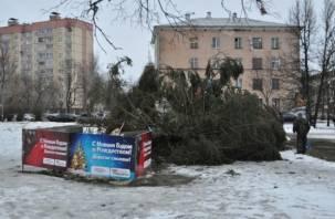 В Смоленске упала новогодняя елка на улице Фрунзе