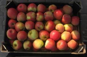 В Смоленске задержан груз с яблоками неизвестного происхождения