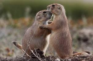 Выберете лучшую «влюбленную парочку» смоленского зоопарка