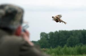 В Смоленской области определены сроки охоты на диких животных и дичь