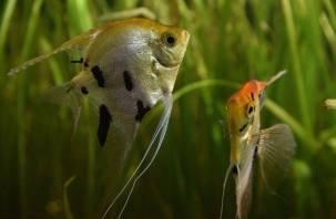 Смоленский зоопарк покажет аквариумных рыбок