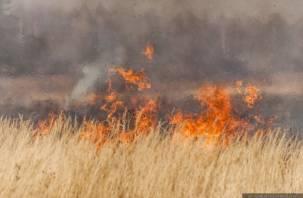 МЧС бьет тревогу: смоляне умышленно выжигают землю