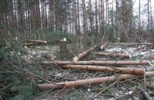 Смолянин организовал масштабную вырубку брянского леса