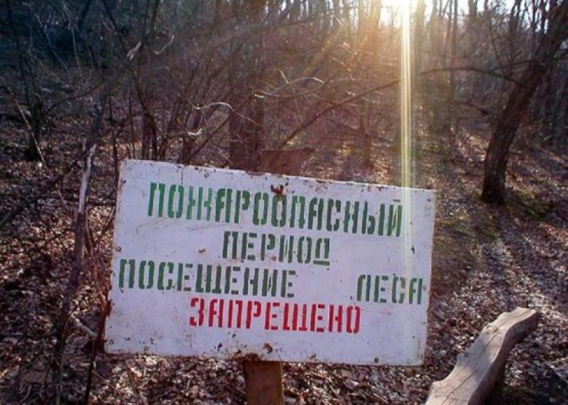 Поездка в лес на шашлыки в Смоленской области отменяется