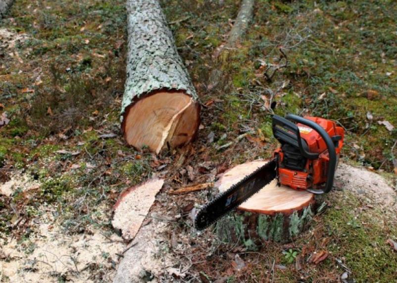 Активисты ОНФ начали борьбу с незаконной вырубкой лесов на Смоленщине