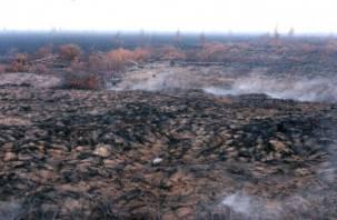 Дым из Смоленской области может достигнуть Москвы