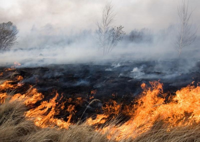 Контроль пожароопасной обстановки в Смоленской области: от космоса до лесничих