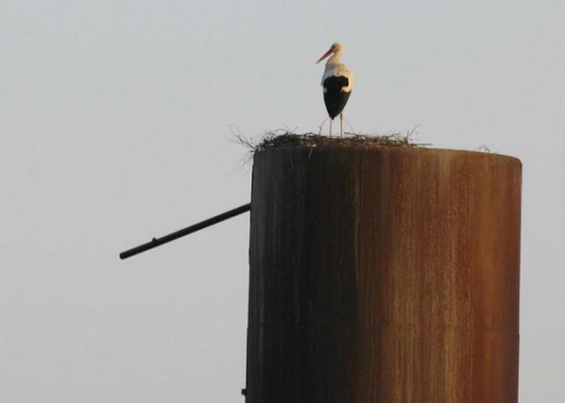 Двое ярцевчан спилили водонапорную башню, чтоб сдать ее на металлолом