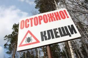 Клещи продолжают кусать жителей Смоленской области