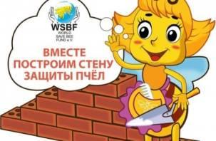 Завтра в Смоленске начнется «Строительство стены защиты пчёл»