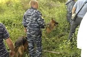 В Смоленской области в лесу пропал ветеран