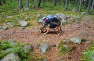 Ушел в лес. В Смоленской области пропал 66-летний мужчина