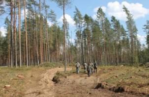В Велижском районе велась незаконная вырубка леса