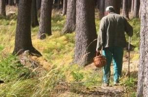 Смоляне открыли грибной сезон