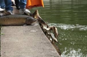 «Ловись рыбка большая». В Смоленске выпустили 300 кг амура и карпа