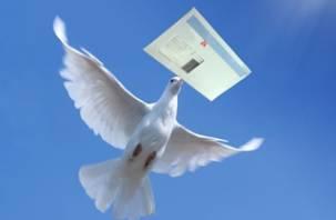 В Смоленске пройдет голубиная эстафета