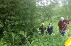 В Смоленской области начали борьбу с борщевиком