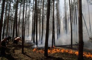 В Духовщинском районе опять горит лес