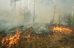 В Смоленской области продолжается борьба с крупным лесоторфяным пожаром