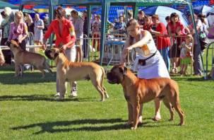 В Смоленске прошла масштабная выставка собак