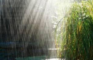 Летний дождь. Смоленск ждут осадки