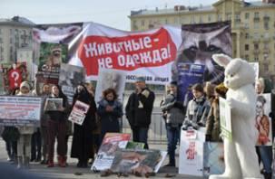 В Смоленске пройдет акция по защите пушистых животных