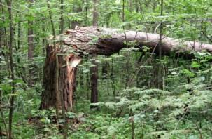 Смоленские лесопатологи исследуют поврежденные леса