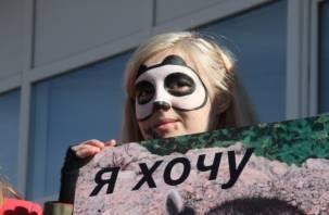 «Животные – не одежда». В Смоленске стали на защиту пушных зверьков
