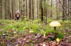 В Смоленской области муж и жена пропали, отправившись за грибами