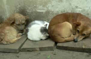 Смолян просят помочь бездомным животным