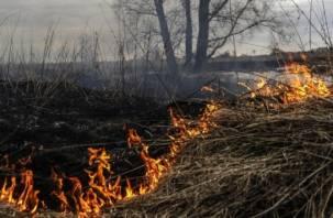 В этом году Смоленщина умеренно пострадала от лесных пожаров